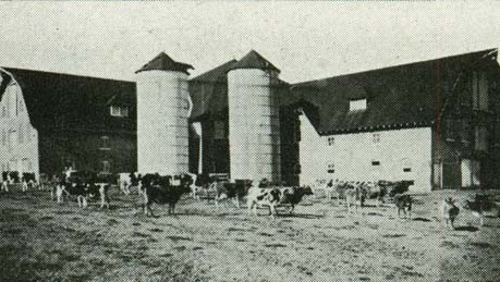 1921 Dairy with Cows